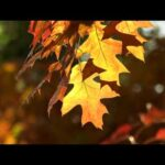 Fall | Mindful Moments | Hay House