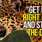 GET UP AND START THE DAY - New Motivational Video Compilation - Morning Motivation