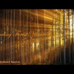 Healing Forest Vibrations | Meditation Therapy | Yoga | Healing | Sleep Music |