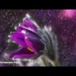 Something Calming | Natural Sound Meditation | Anxiety Relief | Calm Music | Isochronic