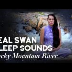White Noise For Sleep - River Sounds in the Rocky Mountains Audio for Sleeping, Relaxing, Meditation